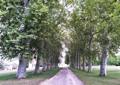 Domaine Paul Claudel - Français:   Allée du château de Brangues
