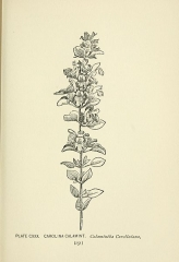 Ancienne grange d'Outre-Aube -  A guide to the wild flowers,  by Alice Lounsberry. With sixty-four coloured and one hundred black-and-white plates and fifty-four diagrams by Mrs. Ellis Rowan; with an introduction by N. L. Britton.