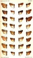 Ancienne grange d'Outre-Aube - English: PLATE CXXX. 1. Athetis morosa, m. Vol. VIII. p. 328. W. Siberia. 2. A. rebeli, m. p. 329. Canaries. 3. A. vullschlegeli, m. p. 332. Switzerland. 4. A. bremusa, m. p. 334. Bombay. 5. A. multifera, m. p. 334. Canada. H9657 Platyperigea multifera (Wlk., 1857) 6. A. himaleyica, m. p. 335. Punjab. 7. A. chinensis, m. p. 336. W. China. 8. A. extima, m. p. 337. Vancouver. H9656 Platyperigea extima (Wlk., 1865) 9. A. grisea, m. p. 338. Russia. 10. A. melanosticta, m. p. 342. Br. E. Africa. 11. A. flavipuncta, m. p. 343. Mashonaland. 12. A. croceipuncta, m. p. 343. C. Colony. 13. A. ignava, m. p. 345. Mauritius. 14. A. pigra, m. p. 346. Mauritius. 15. A. sincera, m. p. 346. Punjab. 16. A. cognata, m. p. 347. Sikhim. 17. A. singula, m. p. 348. Natal. 18. A. heliastis, m. p. 348. Transvaal. 19. A. anamaeosis, f. p. 349. Br. E. Africa. 20. A. albirena, m. p. 349. Bechuanaland. 21. A. leuconephra, m. p. 350. Mashonaland. 22. A. meralis, f. p. 35l. Massachusetts. H9654 Platyperigea meralis (Morr., 1875) 23. A. melanopis, m. p. 351. Mashonaland. 24. A. glauca, m. p. 352. Natal. 25. A. melanephra, m. p. 352. Basutoland. 26. A. atrirena, m. p. 353. C. Colony. 27. A. absorbens, f. p. 354. C. Colony. 28. A. vicina, m. p. 355. Russia. 29. A. flavitincta, m. p. 356. Punjab. 30. A. stygia, m. p. 357. Punjab. 31. A. aeschria, m. p. 358. C. Colony. 32. A. tarda, m. p. 360. Distr. of Columbia.  H9650 Anarthodes tarda (Gn., 1852)