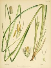Ancienne grange d'Outre-Aube - British engraver and botanist