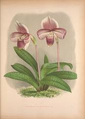 Ancienne grange d'Outre-Aube -  Lindenia: iconographie des Orchidées