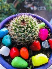 Aqueduc de Nîmes - English: a cactus plant with beads