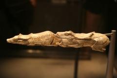 Site archéologique des quatre abris sous roche du château de Bruniquel - English: Carved bones from the GLAM event at the British Museum's Ice Age exhibit.