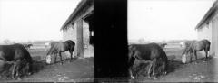 Château de Cornusson - Fonds Trutat - Photographie ancienne  Cote: TRU C 985 Localisation: Fonds ancien (S 30)  Original non communicable  URL:  http://numerique.bibliotheque.toulouse.fr/cgi-bin/library?c=photographiesanciennes&a=d&d=/ark:/74899/B315556101_TRUC0985  Titre: A l\'annexe, cheval à l\'abreuvoir, Cornusson, février 1903  Auteur: Trutat, Eugène Rôle de l'auteur: Photographe  Lieu de création: Cornusson (Parisot; château) Date de création:  1903  Mesures:: 5 x 11 cm  Mot(s)-clé(s):  -- Château -- Cheval -- Homme -- Costume masculin -- Abreuvoir -- Ecurie -- Cour -- Bâtiment -- Toit -- Tuile -- Fenêtre -- Porte -- Hiver  -- Parisot (Tarn-et-Garonne) -- Saint-Antonin-Noble-Val (Tarn-et-Garonne; canton) -- Midi-Pyrénées (France) -- Cornusson (Parisot; château)  -- 20e siècle, 1e quart -- 15e siècle  Médium: Photographies -- Négatifs sur plaque de verre -- Stéréogrammes -- Noir et blanc -- Scènes animalières -- Scènes rurales   Bibliothèque de Toulouse. Domaine public