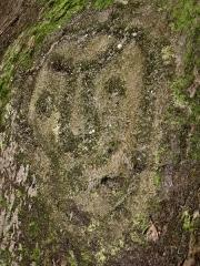 Site des roches gravées de la rivière Du Plessis - Français:   Pétroglyphe Arawak, rivière Plessis (Guadeloupe)