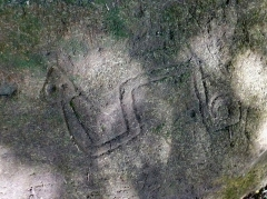 Le Serpent de Pascaud - Français:   Roche gravée représentant un serpent.