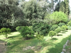 Jardin dit Serre de la Madone - English: Small citrus orchard of the jardin des Serres de la Madone in Menton (Alpes-Maritimes, France).