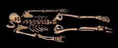Gisement préhistorique de la Ferrassie - Deutsch: La Ferrassie 1, eines der vollständigsten Skelette eines erwachsenen Neandertalers, entdeckt 1909 im Grand Abri de La Ferrassie. Original, Museé de l'Homme Paris, Ausstellung
