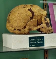 Gisement préhistorique de la Ferrassie - English: Homo neanderthalensis; Museum of prehistoric anthropology; Monaco