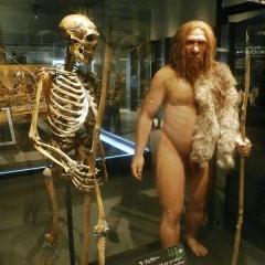 Gisement préhistorique de la Ferrassie - 日本語: ネアンデルタール人(ラ・フェラシー 1)の骨格標本と復元模型。国立科学博物館の展示。ポーズの状況設定は「現代につれてこられて動揺しているが、平静を装っている」。