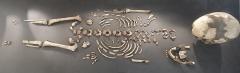 Gisement préhistorique de la Madeleine - Musée national de Préhistoire aux Eyzies-de-Tayac-Sireuil: squelette de l'
