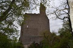 Ruines du château de Spesbourg -  DSC_0029