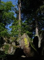 Mur païen -  Une vue le long du circuit Sud du Mur Païen. La couleur jaune sur le rocher est celle d'un lichen.