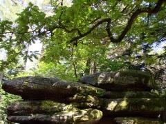 Mur païen -  Beckenfels, rochers dont le sommet présente une cuvette creusée, situés le long du circuit Sud du Mur Païen. Vue avec une branche de chêne tortueuse.