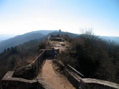Ruines du château de Hohbarr ou Haut-Barr -  Haut-Barr castle (looking SW)