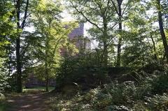 Ruines du château du Vieux-Windstein -  DSC_6595