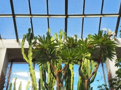 Jardin botanique -  cactus