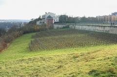 Restes du château Neuf -  Vigne à Saint-Germain-en-Laye - Yvelines (France)