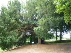 Chapelle Notre-Dame-de-Pitié - Français:   If attenant (arbre remarquable des Côtes-d\'Armor) qui serait aussi vieux que la chapelle.