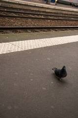 Gare de Toulouse-Matabiau -  Your _closest_ friend in french train stations