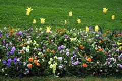Jardin Massey -