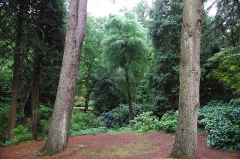 Domaine du Bois des Moutiers - Deutsch:   Im Park Bois des Moutiers in Varengeville-sur-Mer im Sommer 2017.