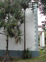 Muséum d'Histoire Naturelle -  Un Pandanus l'intérieur du Jardin de l'État de Saint-Denis.