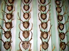 Ancien château royal, prieuré Saint-Maurice et mur gallo-romain - Français:   Le plafond de la salle Desportes.