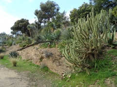 Domaine du Rayol - English: Rock garden with Mexican flora from Domaine du Rayol