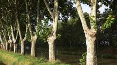 Canal du Midi -  Trees at the Canal du Midi