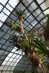 Jardin fleuriste municipal - English: Jardin des serres d'Auteuil, a botanical garden in the Bois de Boulogne, Paris 16th, located at 3 avenue de la Porte d'Auteuil and 1 avenue Gordon-Bennett.