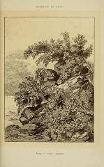 Roseraie du conseil général du Val-de-Marne, ancienne roseraie Gravereaux -   Roseraie de l\'Haÿ   Scène de rosiers rampants.
