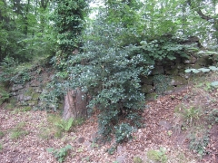 Ruines du château de Rathsamhausen - English: part of the enclosing wall west of the circular ditch