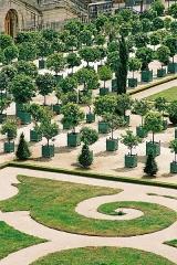Domaine national de Versailles - Français:   Vue étroite de l\'orangeraie.