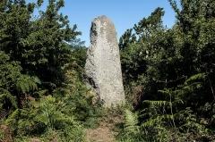 Alignement de Traonigou - Français:   Menhir de Traonigou (fait partie de l\'alignement de Traonigou)