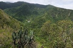 Habitation caféière La Grivelière - Français:   Guadeloupe - Vallée de la Grande Rivière avec au fond le Domaine de l\'Habitation La Grivelière - Plantation de Café sur la commune de Vieux-Habitants.