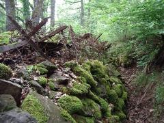 Champ de bataille de l'Hartmannswillerkopf dans la forêt communale (également sur communes de Hartmannswiller, Soultz-Haut-Rhin, Wattwiller et Wuenheim) - Français:   Vestiges d\'une tranchée de la Première Guerre mondiale entre le Hirtzenstein et le Hartmannswillerkopf