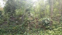 Cimetière de la Madeleine - Français:   Tombes disparaissant dans la végétation