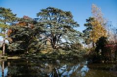 Domaine national de Saint-Cloud - Français:   Cèdre du Liban au Jardin du Trocadéro dans le Parc Saint-Cloud