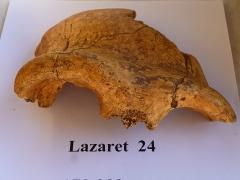 Grotte préhistorique du Lazaret - Français:   Os frontal humain \