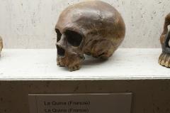 Gisement paléolithique dénommé Gisement de la Quina - English:   Skull of Neanderthal from La Quina (France). Temporary exhibition Welcome to the Neandertals, Pavilon Anthropos, Brno.