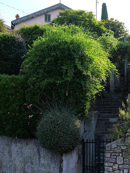 Photo du Monument Historique Villa le Bosquet du peintre Pierre Bonnard situé à Le Cannet