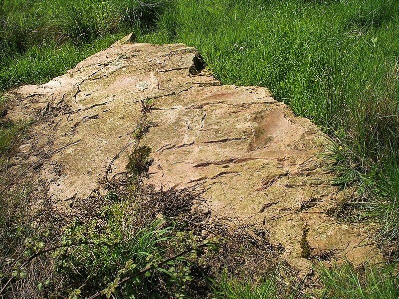 Photo du Monument Historique Polissoir situé à Bons-Tassilly