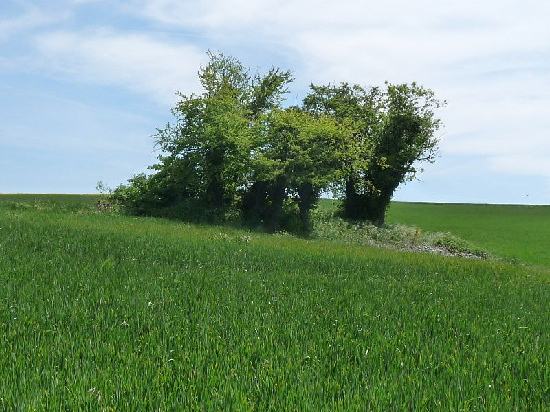 Photo du Monument Historique Dolmen de la Pierre Folle situé à Chenommet