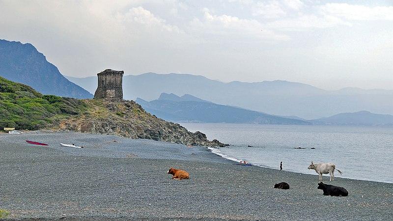 Photo du Monument Historique Tour d'Albo, dite aussi d'Olchini ou del Greco situé à Ogliastro