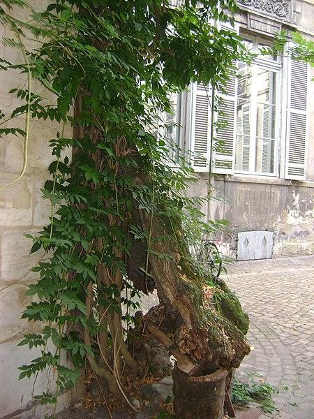 Photo du Monument Historique Ancien Hôtel de l'Octroi, dit Hôtel de Ragueneau situé à Bordeaux