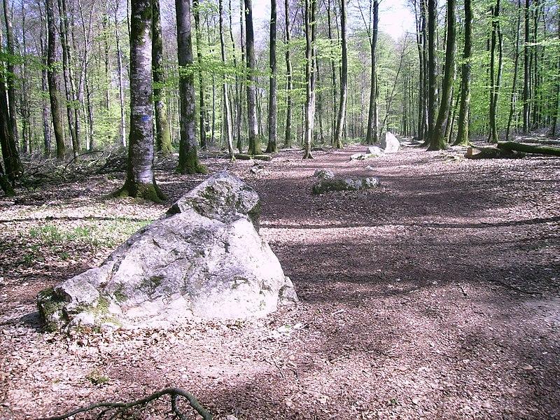 Photo du Monument Historique Dolmen dit la Pierre courcoulée ou Pierre des Huguenots, et alignement mégalithique dit Le Cordon des Druides situé à Landéan