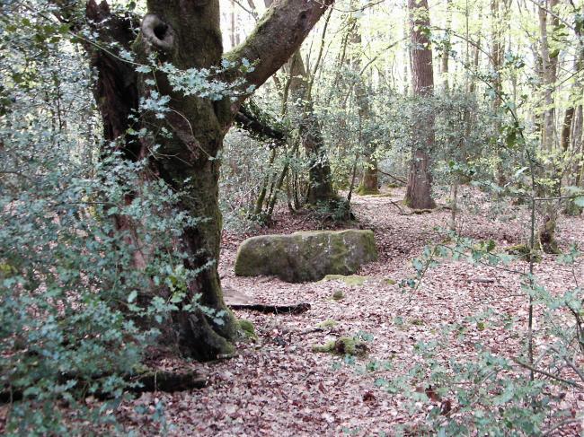 Photo du Monument Historique Mégalithe, dit Grès de Saint-Méen situé à Talensac