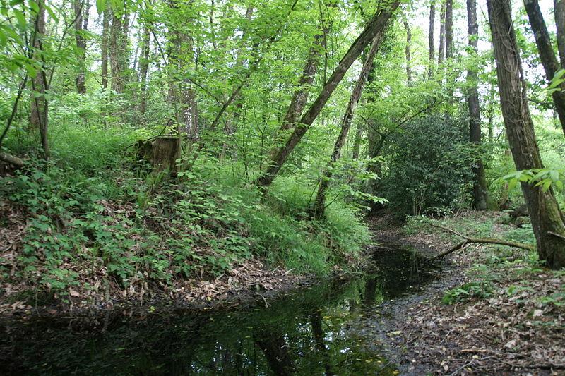 Photo du Monument Historique Site archéologique du bois de Montbourcher situé à Vignoc