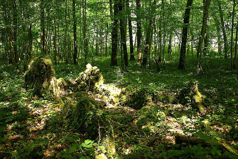 Photo du Monument Historique Parcelle D 201 avec ses vestiges préhistoriques situé à Cohons
